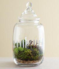 Going For a Ride Moss Terrarium - I sense a DIY project coming up. Miniature Terrarium, Garden Terrarium, Glass Terrarium, Succulent Terrarium, Terrarium Ideas, Miniature Gardens, Air Plants, Indoor Plants, Pot Jardin