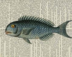 fish vintage blue fish artwork printed on page from von FauxKiss, $12,00
