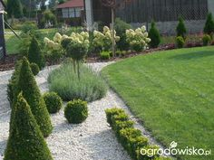 Mój skromny ogród - strona 360 - Forum ogrodnicze - Ogrodowisko