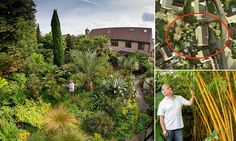 Peering into the lush garden of Tim Wilmot, 56, you would be forgiven for not realising it is in fact a Bristol suburb, nurtured to tropical brilliance over the course of decades.