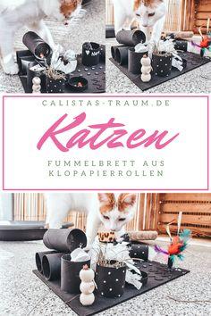 Um #Wohnungskatzen richtig zu beschäftigen, bedarf es viel Zeit und Ausdauer. Mit diesem Fummelbrett schafft ihr ein tolles Spielzeug für eure #Katze ohne dabei groß Geld ausgeben zu müssen.  #Fummelbrett #Klopapierrollen #verwenden #basteln #Beschäftigung #diy #crafts #cats #spielzeug #spielen #bauen #ideen Cat Playground, Funny Cute Cats, Cat Room, Creative Inspiration, Fur Babies, Diy And Crafts, Dog Cat, Kittens, Diy Projects