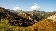 Los bosques de hayas o pinares de la provincia esconden rincones que esta temporada lucen colores únicos