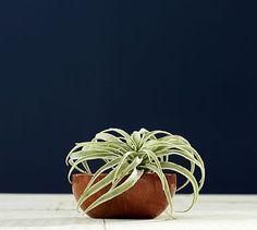 Faux Tillandsia Succulent Stem #potterybarn