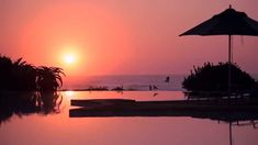 Zimbali Coastal Resort is a place where infinite deserted beaches divide the warm Indian Ocean and the lush coastal vegetation. Wild Life Game, The Lucky One, Second World, Bird Species, Bird Watching, Lush, Coastal, Cruise, Wildlife