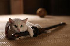 猫侍のねこ