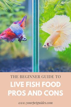 The type of food you choose to feed your aquarium fish will have a major impact on their health. Here are the basics of live foods so that you can discover how they can benefit your freshwater aquarium fish. Aquarium Fish Food, Diy Aquarium, Freshwater Aquarium Fish, Colorful Fish, Tropical Fish, Goldfish Food, Shrimp And Eggs, Sea Monkeys, Amigurumi