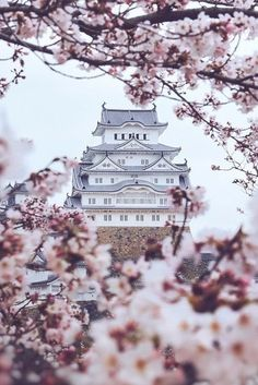 Himeji Castle with cherry blossom - Explore the World with Travel Nerd Nici, o. Himeji Castle with Nara Japan, Japan Sakura, Japan Art, Beautiful World, Beautiful Places, Amazing Places, Beautiful Flowers, White Flowers, Japan Travel