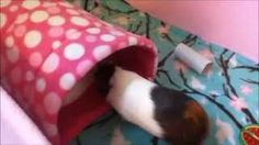 how to make a guinea pig cuddle cup - YouTube