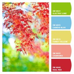 Instantly turn any picture into a palette with ColorSnap, created for you by Sherwin-Williams. Colour Schemes, Color Trends, Color Patterns, Color Combos, Pantone, Beautiful Color Combinations, Color Palate, Design Seeds, World Of Color