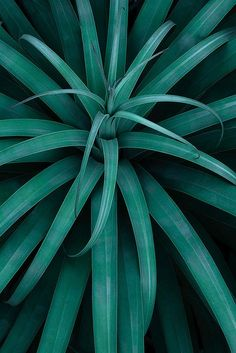 26 Ideas plants photography nature flora for 2019 Go Green, Green Colors, Colours, Green Shot, Green Cups, Shades Of Teal, Belle Photo, Mother Nature, Planting Flowers