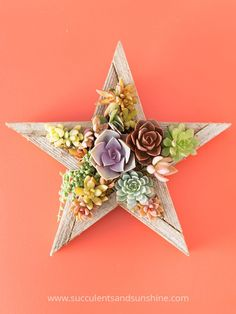 This succulent star by Succulent Wonderland is beautiful!