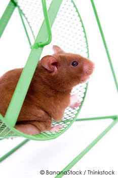 Surprising Facts About Pet Rats  http://ow.ly/9FmaX