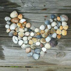 Shells from Emerald Isle
