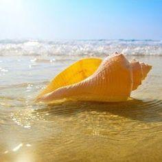Mutluluk Rehberim: Deniz, Kum, Güneş, Yaz ve Mavi'nin Tonları