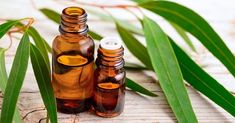 Chemicals eminent as one of the incomparable Eucalyptus Oil Manufacturers, Suppliers and Exporters from India. Aside from healing properties, eucalyptus oil is highly demanded for its industrial and practical uses. Natural Asthma Remedies, Ayurvedic Remedies, Eucalyptus Oil, Eucalyptus Essential Oil, Eucalyptus Leaves, Essential Oils For Asthma, Grape Seed Extract, Peanut Oil, Aromatherapy