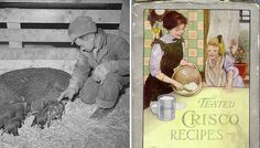 How Vegetable Oils Replaced Animal Fats in the American Diet. In this excerpt from The Happiness Diet, discover how Procter & Gamble convinced people to forgo butter and lard for cheap, factory-made oils loaded with trans fat. Crisco Recipes, Real Food Recipes, Nourishing Traditions, American Diet, Food Industry, Health Articles, Healthy Fats, Healthy Life, Vegetables