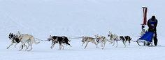 Minnesota Winter Festivals Dog Sled