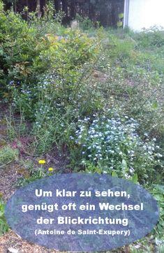 Um klr zu sehen, genügt oft ein Wechsel der Blickrichtung (Antoine de Saint-Exupery) Plants, Happy Life, World, Quotes, Plant, Planets