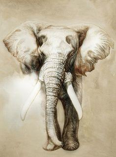 Elephant Art Print — Designspiration