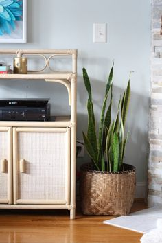 Top 5 Reasons To Have More Plants - Simple Stylings