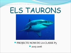 Projecte taurons