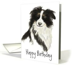 Birthday Border Collie card (728527)
