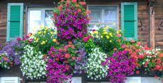 S přírodním hnojivem docílíte vynikajících výsledků Vegetable Boxes, Garden Styles, Flowers, Plants, Outdoor, Switzerland, Gardening, Windows, Compost