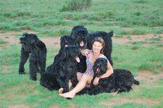 Black Russian Terriers - chrisri dogs