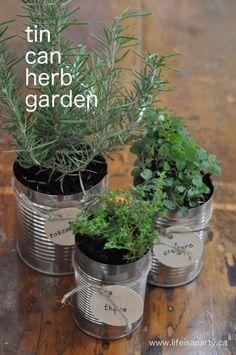 Tin can herbs