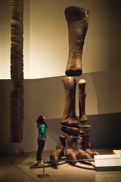 Leg of sauropod Argentinosaurus. Really goes to show just how large these dinosaurs can get!