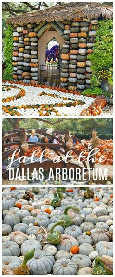 Come see what pumpkins looks like! Fall at the Dallas Arboretum is a magical sight and full of amazing pumpkin displays! Fall Home Decor, Autumn Home, Autumn 2017, Maui Hotels, Pumpkin Display, Dallas Arboretum, Pumpkin Decorating, Fall Decorating, Thanksgiving Diy