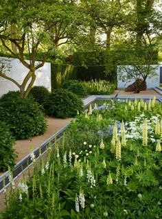 Display garden at Chelsea Flower Show London in 2014 designed by Luciano Giubbilei. Luciano is known for his clean and crisp gardens, more architectural in form….his signature is clipped rows of trees and hedges with modern fountains and sitting areas. However, he went on a creative journey, spending time at Great Dixter in Sussex with the gardener and gardening writer Christopher Lloyd, and discovered the role of abundant and exuberant flora.