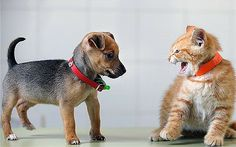 It's finally proven - scientists test whether cats or dogs love us more - Telegraph