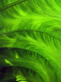 Photography Art in Lime Green Green Life, Green Day, Go Green, Green Eyes, World Of Color, Color Of Life, Bright Green, Green Colors, Green Nature