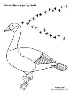 canada goose coloring pages - photo#28
