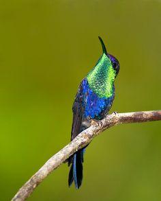 BIRDS AS ART BULLETIN