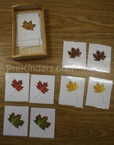 fall leaves, autumn leaves, theme, kid