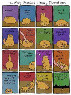 Cat Moves....my cats are both quite skilled in most of these....and a few more not pictured.