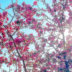 Spring  #love #spring #flowers #pink #sun #sunnyday #colori #primavera #beauty #happiness #sky #picoftheday #pic #photography #moment #morning #likeit #nature - #ciauturin  Photo by @eleonorasassonereal