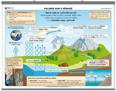 Koloběh vody v přírodě | shopkabinet.cz Viera, Education, Montessori, Chemistry, Biology, Teaching, Training, Educational Illustrations, Learning