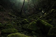 at the mystery of the forest by Hidemi Katayama on 500px