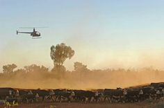 Cattle station NT