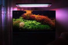 Planted Aquarium, Aquarium Fish, Growing Gardens, Moss Wall, Lego Design, Aquascaping, Plantar, Scp, Water Garden