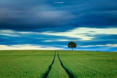 [Explore 27/06/2016 n°81] The lonely tree