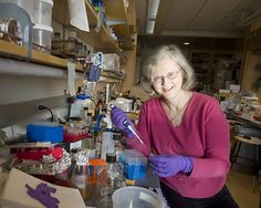 Elizabeth Blackburn Professor of Biochemistry and Biophysics, University of California at San Francisco Each time a cell divides, its chromosomes shorten slightly. To protect vital genes from being lopped off, chromosomes are capped with telomeres, blocks of DNA and protein. Telomeres are maintained by telomerase, an enzyme discovered by Blackburn  and biologist Carol Greider. In most healthy cells, telomerase production eventually ceases, telomeres whittle down, and the cell dies.