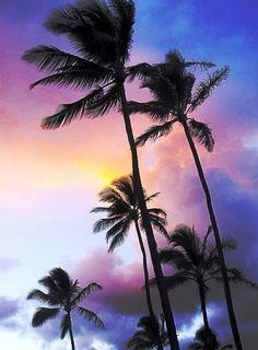Tropic Breeze, Kauai Style <3