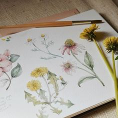 Feeling in a very floral mood after discovering Tasha Tudor's amazing garden🌷Have a peek in my stories if you don't know about her, you… Watercolor Sketchbook, Art Sketchbook, Botanical Drawings, Botanical Prints, Watercolor Flowers, Watercolor Paintings, Watercolours, Nature Sketch, Nature Journal