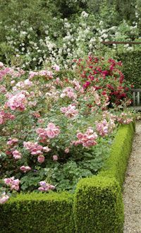 rose garden in a hedge- the profusion of roses is what makes this so lovely!
