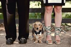 This picture makes me wish we were able to get a dog before the wedding :)
