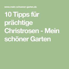10 Tipps für prächtige Christrosen - Mein schöner Garten